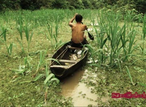 Amazonian Experience